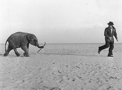 Beach Elephant Art Print by John Drysdale