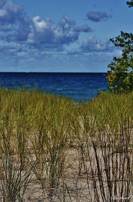 Photograph - Beach Grass 2 by Burland McCormick