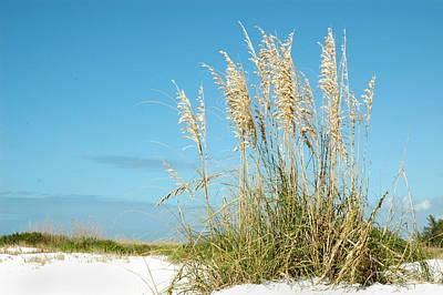 Photograph - Beach Grass by Carol Vanselow