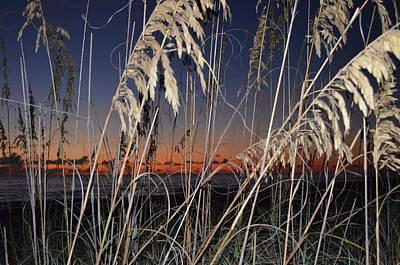 Beach Grass Art Print by Susan McNamara