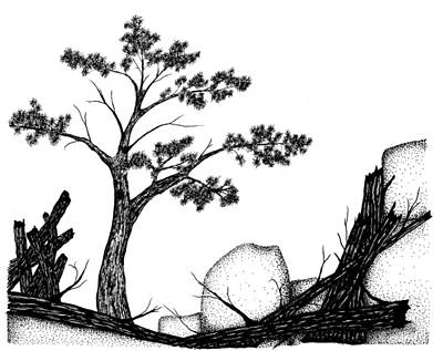 Beach Landscape Drawing - Beach Pine by Jason Carroll