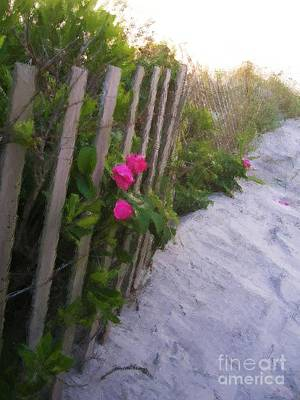 Digital Art - Beach Roses by Denise Dempsey Kane