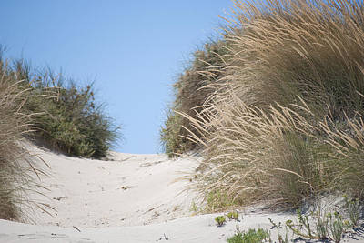 Photograph - Beach Sand Dunes II by Michelle Wrighton