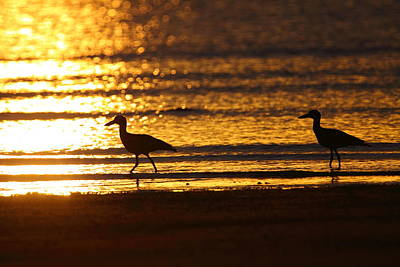 Beach Stone-curlews At Sunset Art Print by Bruce J Robinson
