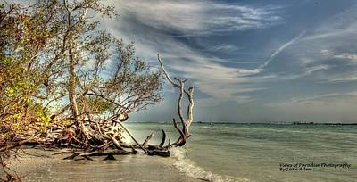 Photograph - Beach Tree by Sean Allen