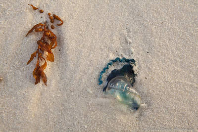 Beached Art Print by Charles Warren