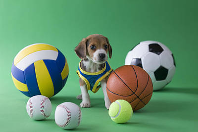 Beagle Puppy And Sports Art Print by Mixa