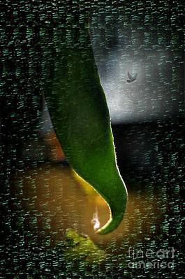 Green Beans Digital Art - Bean 12 Sting  by The Stone Age