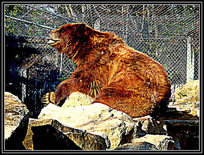 Photograph - Bear-2 by Anand Swaroop Manchiraju