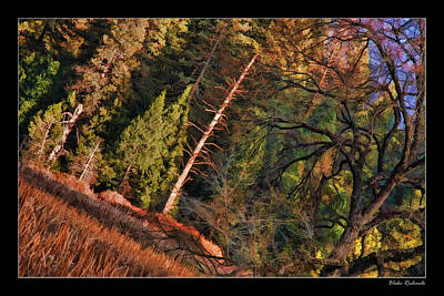 Photograph - Bear Lonely Ttree by Blake Richards