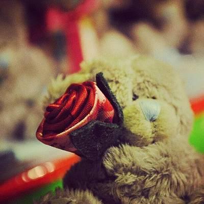 Plus Photograph - #bear #rose #puppet #plus #doll #cute by Roberto De Dalmases