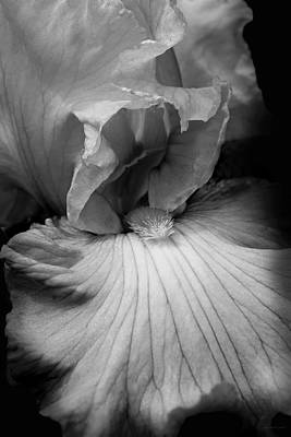 Photograph - Bearded Iris Flower Black And White by Jennie Marie Schell