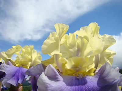 Yellow Bearded Iris Photograph - Bearded Iris Flowers Art Prints Floral Irises by Baslee Troutman