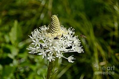 Photograph - Beargrass by Cassie Marie Photography