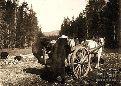 Photograph - Bears Rummaging Garbage by Pg Reproductions