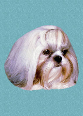 Brindle Photograph - Brindle And White Shih Tzu Dog by Delores Knowles