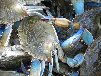 Beaufort Blue Crabs Art Print by Patricia Greer