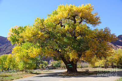 Wagon Wheels Photograph - Beautiful Autumn Tree by Gary Whitton