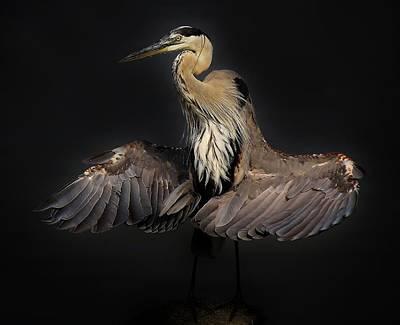 Beautiful Blue Heron Wings Art Print by Paulette Thomas