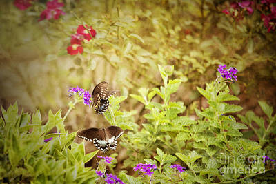 Photograph - Beautiful Butterflies by Cheryl Davis