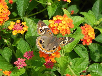 Sandy Owens Photograph - Beautiful Butterfly by Sandy Owens