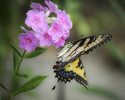 Beautiful Butterfly Art Print by Teresa Mucha