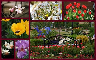 Photograph - Beautiful Colors Of Spring by Kay Novy