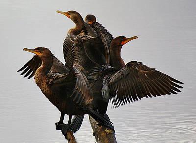 Beautiful Cormorants Art Print by Paulette Thomas