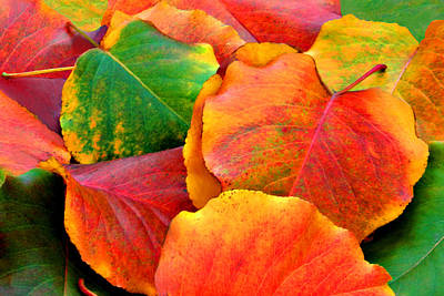 Beautiful Fall Leaves  Art Print