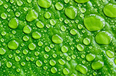 Beautiful Green Leaf With  Water Drops Art Print by Chatuporn Sornlampoo