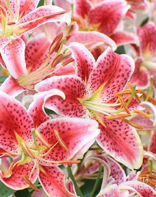 Beautiful Stargazer Lily Art Print