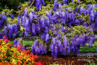 Floribunda Digital Art - Beautiful Wisteria by Fran Woods