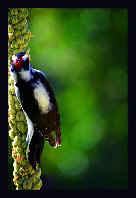 Hairy Woodpecker Photograph - Beautiful Woodpecker On Mullein by Susanne Still