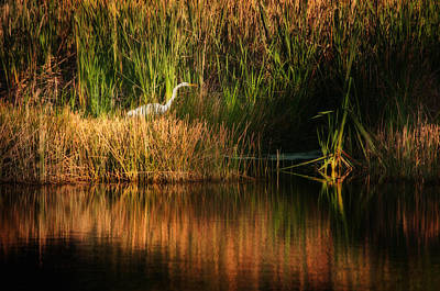 Photograph - Beauty In The Grass by Steven Sparks