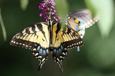 Beauty Of Butterflies  Art Print by Victoria  Kurlinski