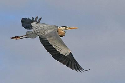 Photograph - Beauty Of Flight by Ira Runyan