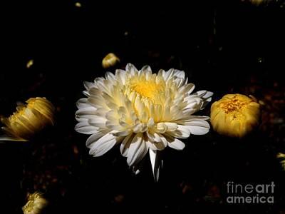 Photograph - Beauty Of Nature by Hari Om Prakash