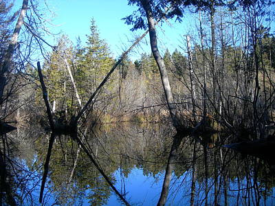 Jeff Johnson Photograph - Beaver Dam Mirror by Jeff Johnson