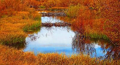 Beaver Photograph - Beaver Ponds by Terril Heilman
