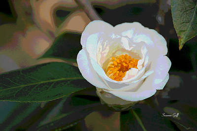 Pistil Digital Art - Bedazzling White Camellia by Suzanne Gaff