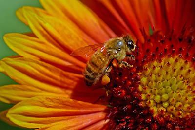 Bee 12 Art Print by Mitch Shindelbower