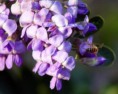 Bee Photograph - Bee And Blooms by Monica Wheelus