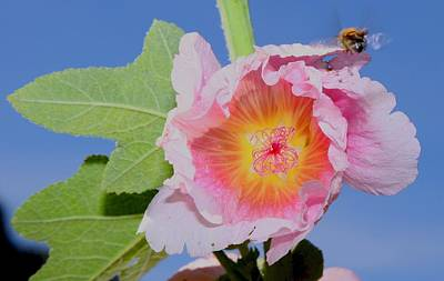 Photograph - Bee And Flower by Scott Brown