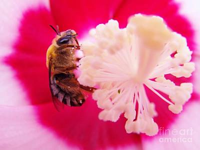 Photograph - Bee And Hibiscus by Judy Via-Wolff