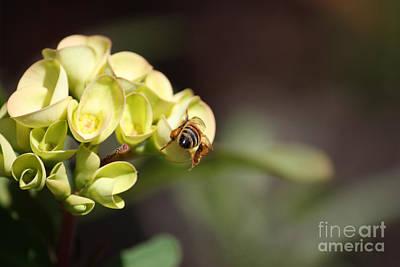 Photograph - Bee Butt by Terri Mills