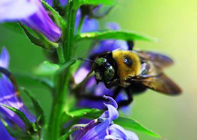 Bee Delight Art Print