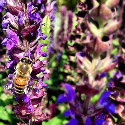 Iphone 4s Photograph - #bee #flower #yellow #black #purple by Anthony Wang