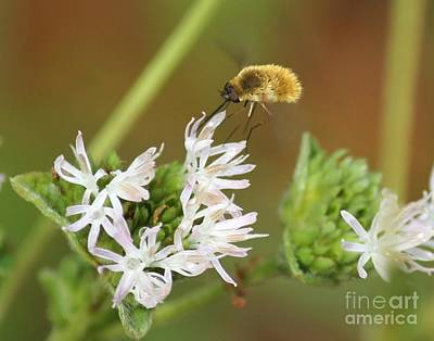 Bee Fly Don't Bother Me Art Print by Theresa Willingham