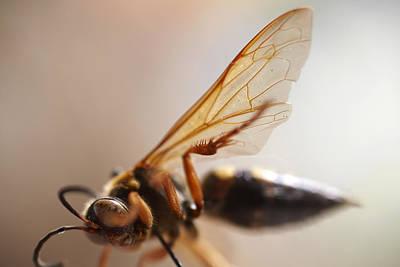 Apocrita Photograph - Bee by Greg Kopriva