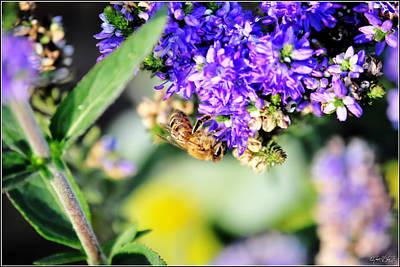 Spot Of Tea - Bee Happy by Michael Frank Jr